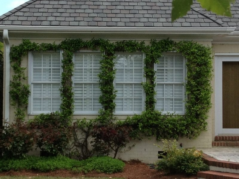 Accordion Shutters for Hurricane Protection between Ornamental Foliage on a House in Wilmington